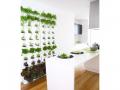 Pour créer un mur végétal !